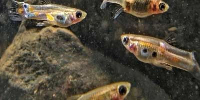 Evolution's Quick Pace Affects Ecosystem Dynamics