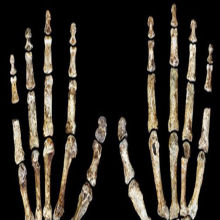 Another New Timeline for <em>Homo naledi</em>