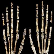 Another New Timeline for <em>Homo naledi</em>