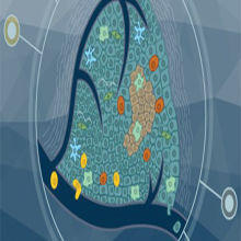 Charting the Tumor Microenvironment