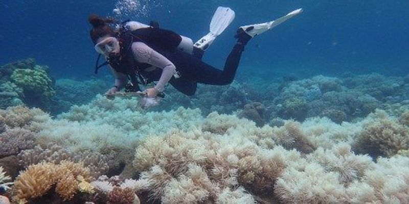 Report Confirms Widespread Great Barrier Reef Bleaching