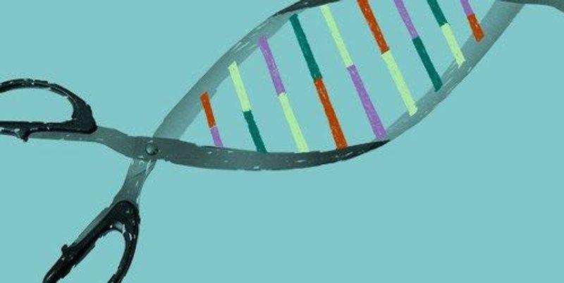 CRISPR Screen Detects Functional Gene Regulation