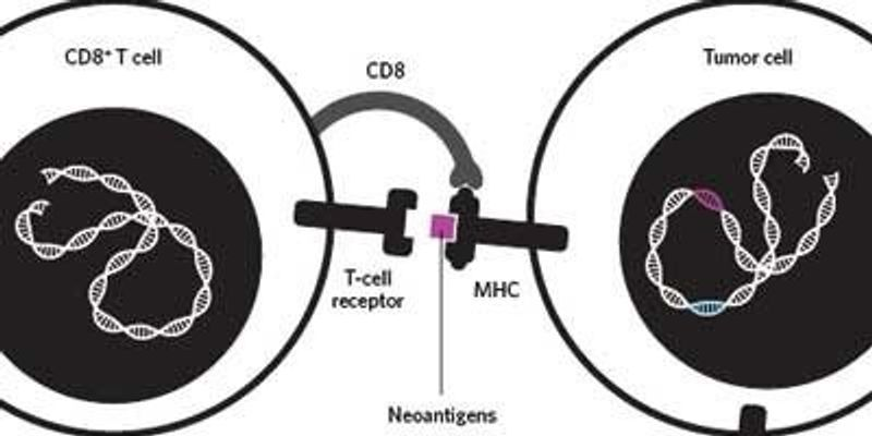 Infographic: Targeting Cancer Antigens