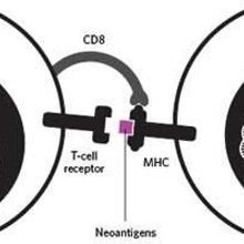 Infographic: Targeting Cancer Antigens