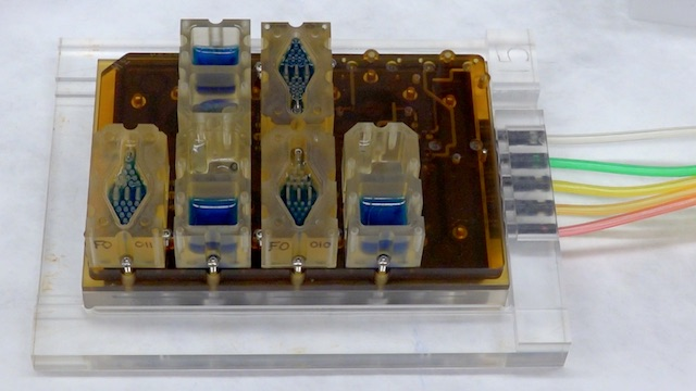 Mini Female Reproductive System on a Chip | The Scientist Magazine®