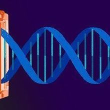 UC Berkeley Team to Be Awarded CRISPR Patent | The Scientist