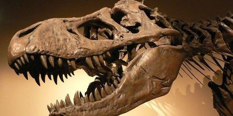 Dinosaur Phylogenetic Tree Shake-Up