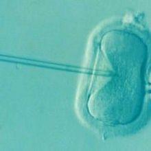 U.K. Moves Forward With Three-Parent IVF