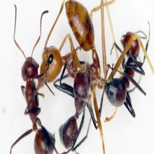 Image of the Day: Ant Attack!