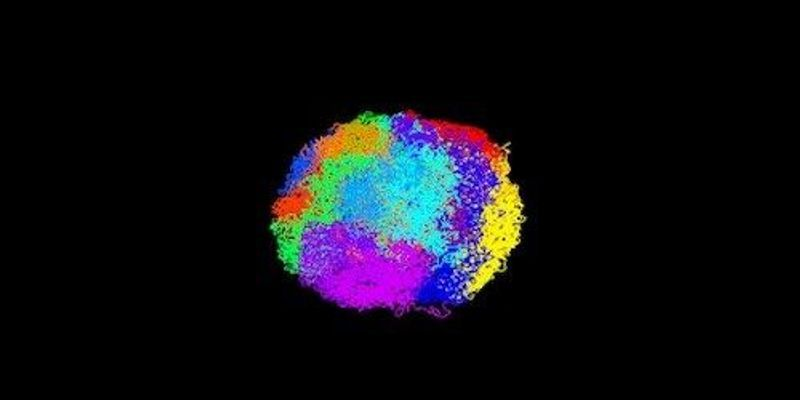 Image of the Day: Colorful Chromosomes