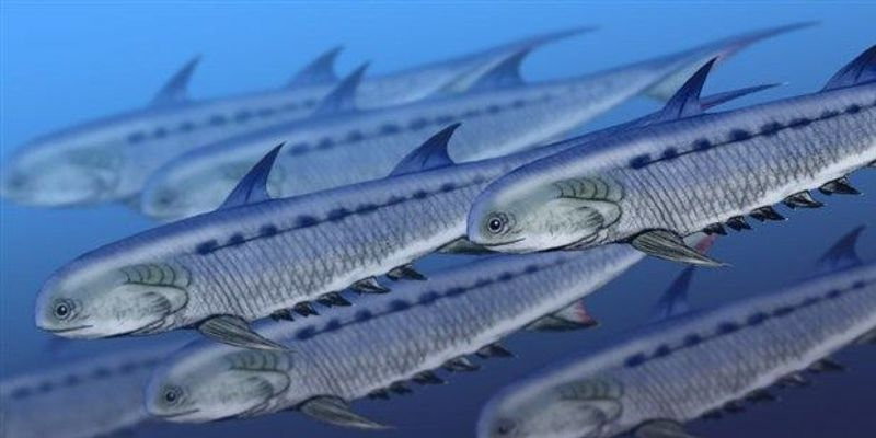 Sharks May Have Evolved from Acanthodians