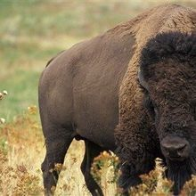 Congress, States Propose Protection Cuts for Endangered Species