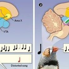 Neural Activity Reflects a Bird's Perception of How Well It Sings