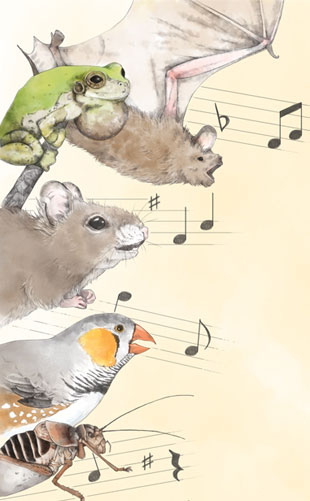 Song Around the Animal Kingdom | The Scientist Magazine®