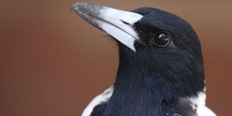 Birds May Make Music, But They Lack Rhythm