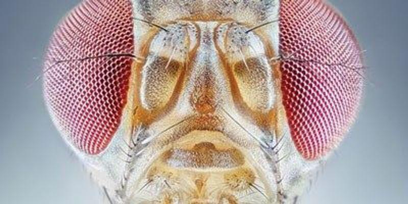 From Cricket Choruses to <em>Drosophila</em> Calls