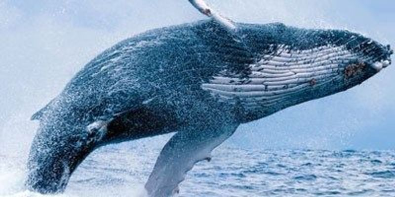 The Mystery of Whale Song