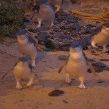 Image of the Day: Penguin Run