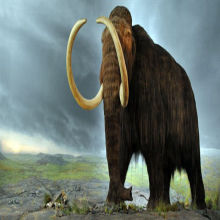 Hybrid Mammoth Embryo Coming Soon?