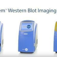 ProteinSimple: FluorChem Western Blot Imaging Systems