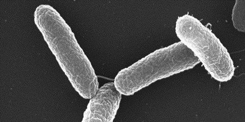 Toward Killing Cancer with Bacteria