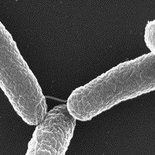 Toward Killing Cancer with Bacteria