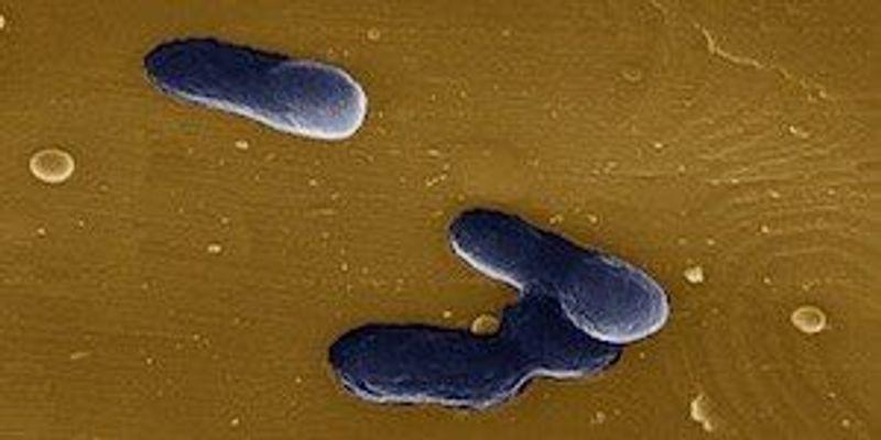 Bacterial Biosensor IDs Endocrine-Disrupting Chemicals