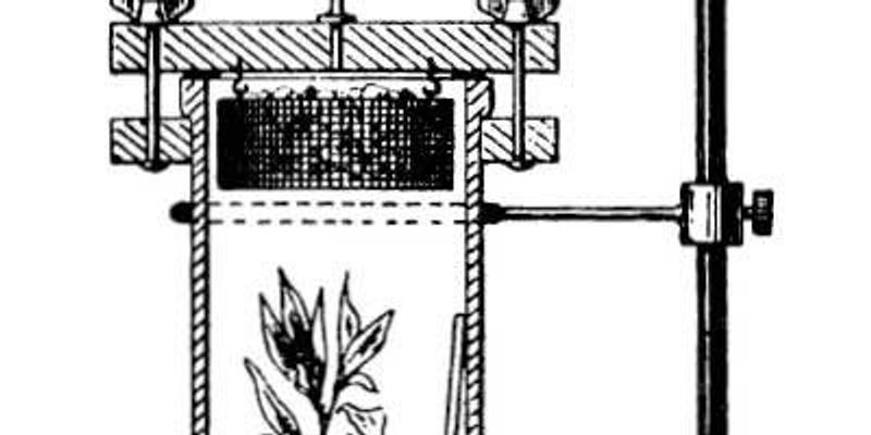 19th Century Experiments Explained How Trees Lift Water