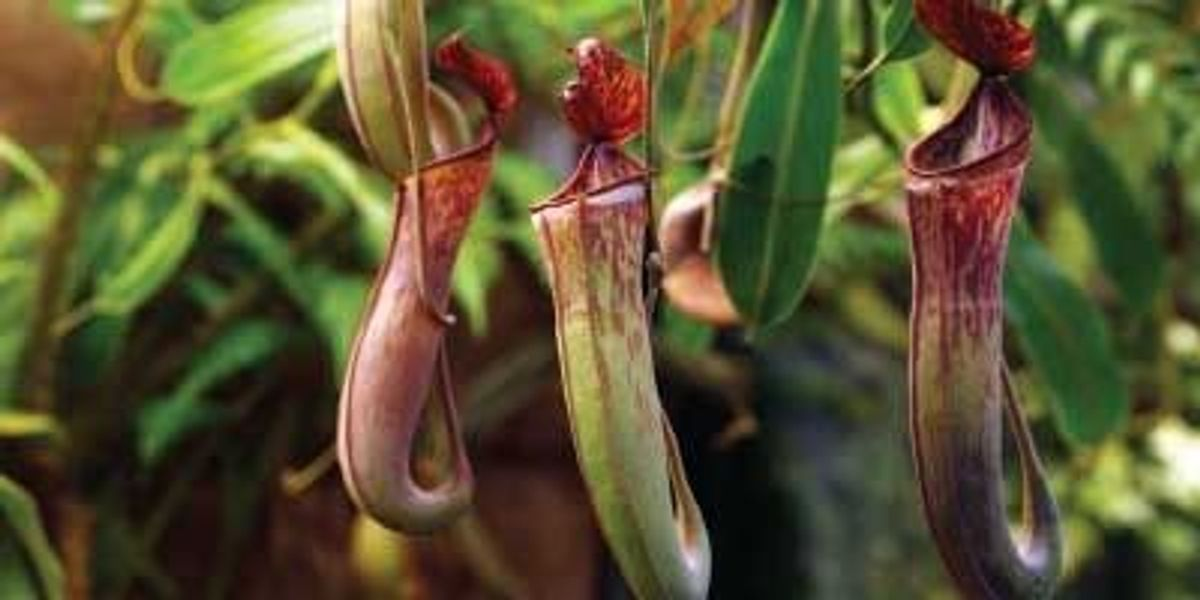 Artificial Pitcher Plant Pick Artificial Nepenthes Artificial Leaves Flowers