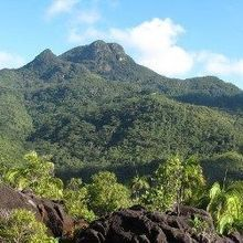 Restoring a Native Island Habitat