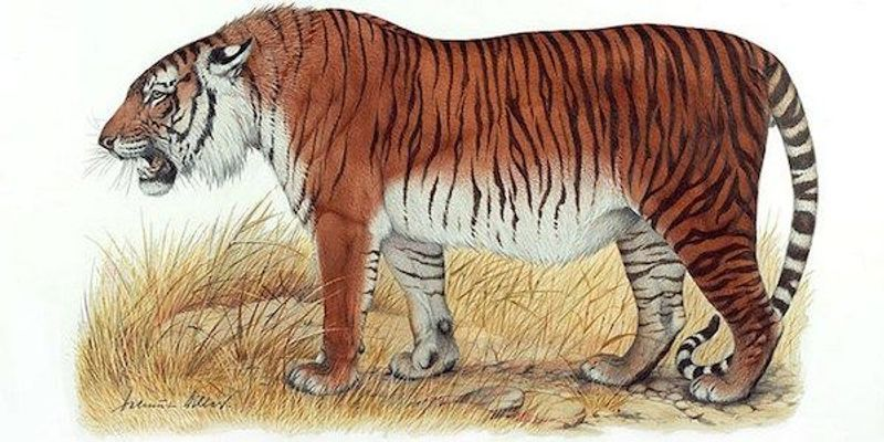 Tigers May Get a Second Chance in Central Asia