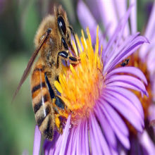"Analysis: Industry-Funded Honeybee Study Was ""Misleading"""