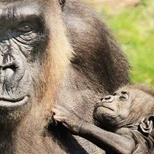 How Mammalian Moms and Babies Choose Sides