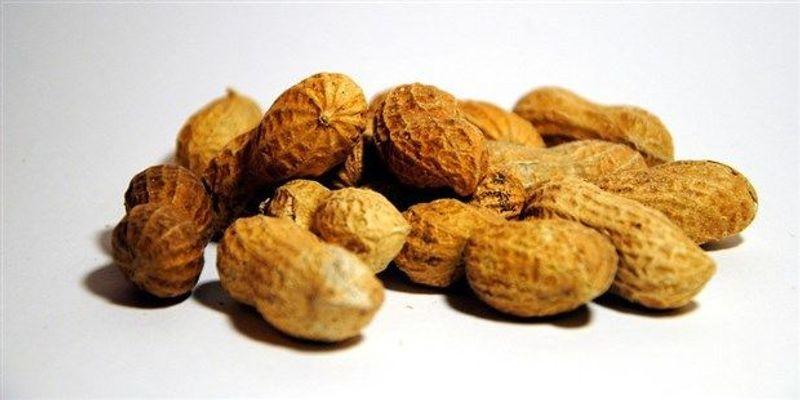 NIH: Allergen-Exposure Strategy Can Prevent Peanut Allergy