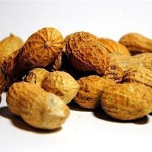 NIH: Allergen-Exposure Strategy Can Prevent Peanut Allergy