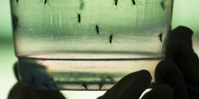 Using Gene Drives to Limit the Spread of Malaria