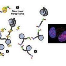 Infographic: Examining Open Chromatin