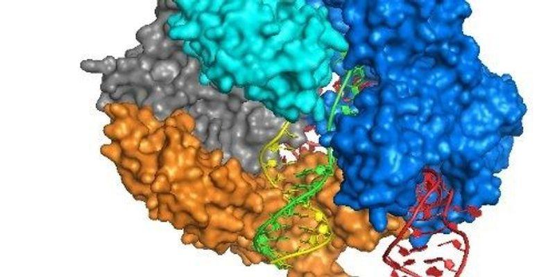 More Anti-CRISPR Proteins to Block Cas9