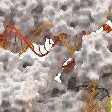 New CRISPR-Cas Enzymes Discovered
