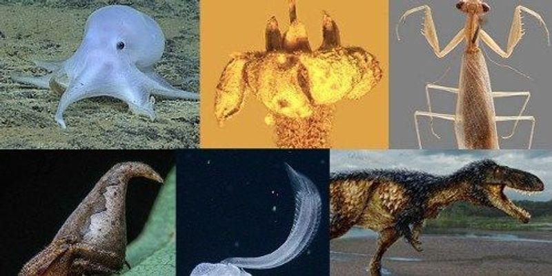 Slideshow: New Species of 2016