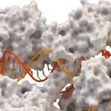 Keeping CRISPR in Check