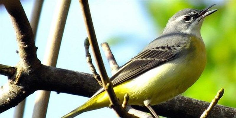 Study: There Are Twice as Many Bird Species as Previously Estimated