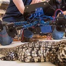 Capturing Endangered Species in All Their 3-D Grandeur