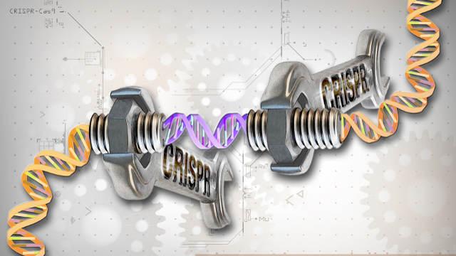 CRISPR patent hearing
