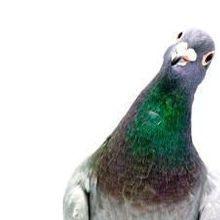 Slideshow: Nerdy Birdies