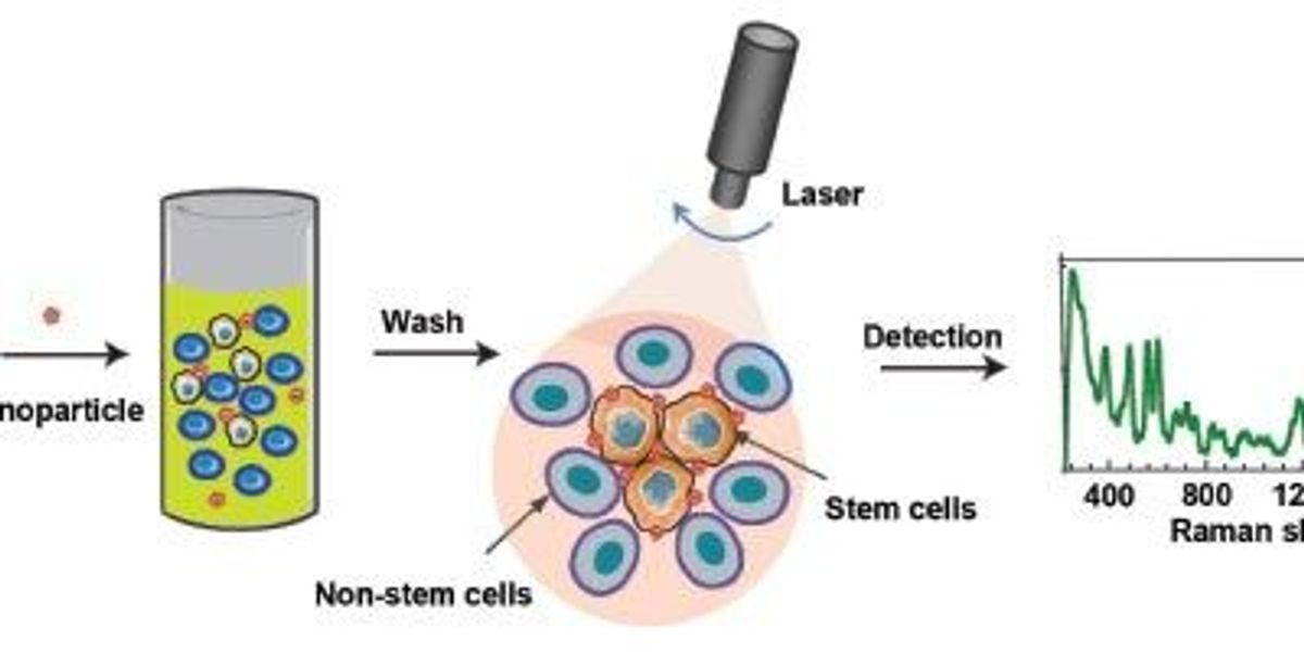 Using Raman Spectroscopy to Identify Cell Types | The
