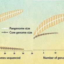 Infographic: Partitioning the Genome