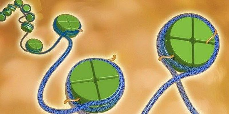 More than 40 New Papers on Epigenetics Published