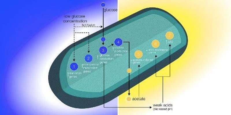 Bacteria Show Signs of Starvation in Space