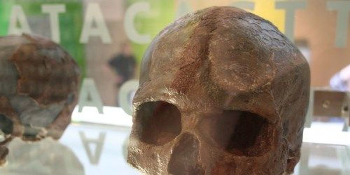 Advantages of Neanderthal DNA in the Human Genome | The
